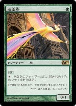 画像1: 【日本語版】極楽鳥/Birds of Paradise[M12緑R]