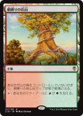 【日本語版】根縛りの岩山/Rootbound Crag[C16土地R]