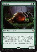 【日本語版】漁る軟泥/Scavenging Ooze[C16緑R]