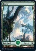 【英語版】森/Forest[ZNR/278]