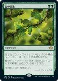 【日本語版】森の頌歌/Sylvan Anthem[MH2緑R]
