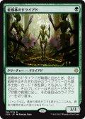 【日本語版】老樹林のドライアド/Old-Growth Dryads[XLN緑R]